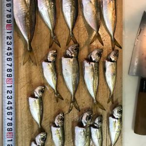 アジ釣りはショボかった。。じょんていらーの釣日記(Vol.289)神奈川県某所B地点2019.09.21