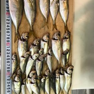 アジ釣り。。少しづつ大きくなって来ましたかね。。じょんていらーの釣日記(Vol.290)神奈川県某所A地点2019.09.28