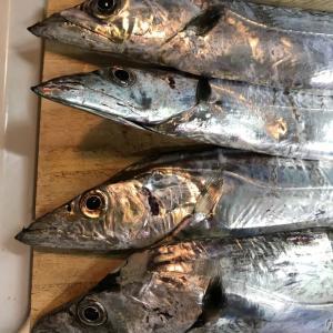 実りの秋続く。。大漁でしたよ。。太刀魚、アジ。。じょんていらーの釣日記(Vol.295)神奈川県某所B地点2019.10.26