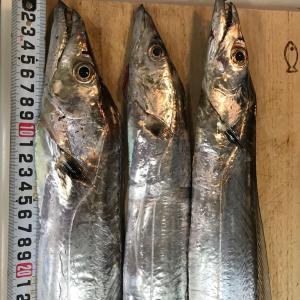 秋。まだまだ続く。太刀魚、アジ。。良い季節です。それと魚炙り器買いました!じょんていらーの釣日記(Vol.296)神奈川県某所B地点2019.11.02