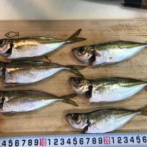 またまたお久しぶりの釣りとなりました。。アジ。。ですかね。。じょんていらーの釣日記(VOl.264)神奈川県某所B地点2019.04.06