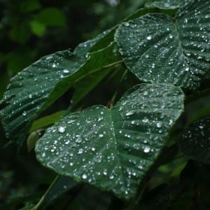 赤城自然園は終始雨でした・・・