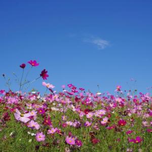 高鼻展望花の丘