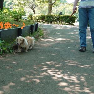 ひさしぶりの公園散歩