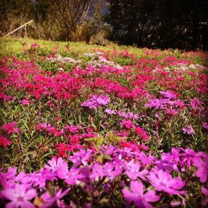 今日は花まつり