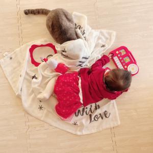 クリスマスパーティー三昧&猫たちも元気です♡