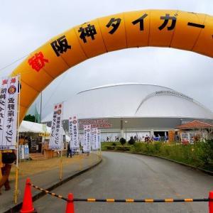 阪神タイガース宜野座キャンプ NO1