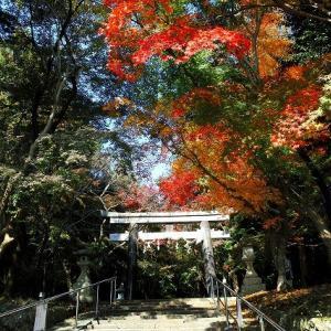 紅葉「大原野神社」