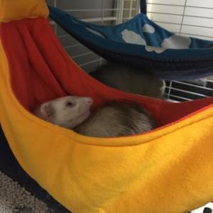 フェレットの寝床!バナナ
