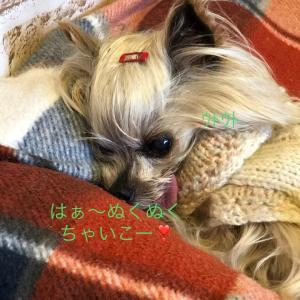 一足早い冬支度(^_-)-☆