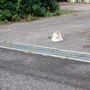 今日の猫さん