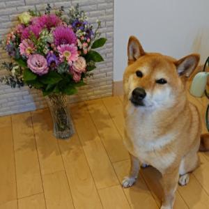 お花見散歩♪