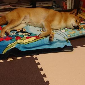 ぐっすり寝。