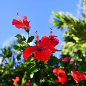 ハーブレッスン感想~ハワイの植物が教えてくれること~