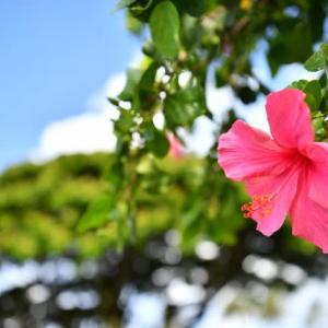 ハワイの自然療法で出来る「ホリスティックケア」