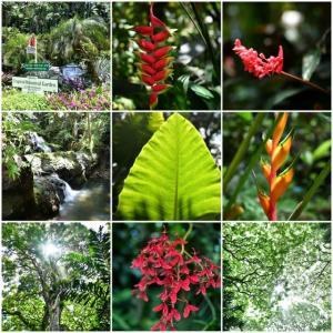 2019年ハワイ島~大自然に触れる旅~