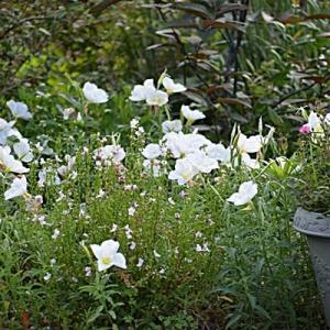 今日の庭の様子を・・・・・