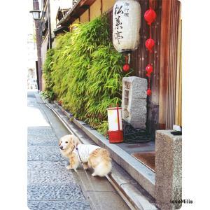 突然に (京都日帰りの旅 vol.1)