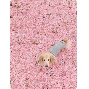 八重桜散っちゃった