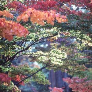 里山の秋・・・(過去写真)