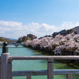 春爛漫・桜満開