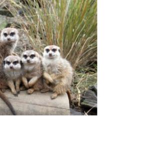 コロナの影響が動物園の動物達にも