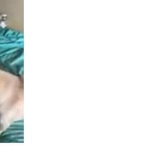 コロナの検査で隔離された飼い主から届いたメッセージ