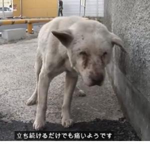 涙なしでは語れない・・亡くなったお婆さんを探し回る犬