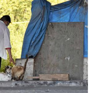 10万円給付金、期限は3カ月以内・捨て猫のえさ代を稼いでたホームレス男性