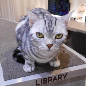 猫カフェと保護猫カフェ?と 猫の幸せ(*^-^*)