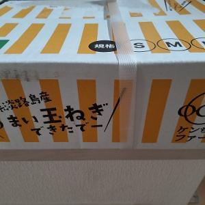 ふるさと納税 兵庫県南あわじ市 『真っ白な白たまねぎ』
