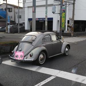 朝は東大阪市水走(みずはい)界隈にて、とても程度の良さそうなVWビートル タイプⅠを見掛け、