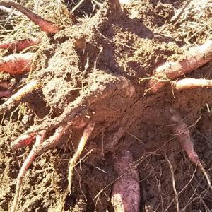 今年最後の大作業の小麦播種をサラッと終える