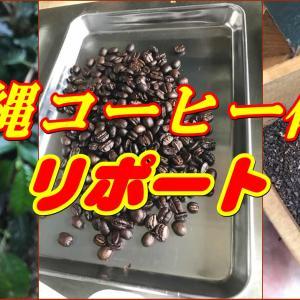 沖縄コーヒー農園 見学初体験リポート