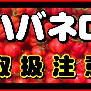 沖縄コーヒー栽培【害虫・害獣】忌避剤作り