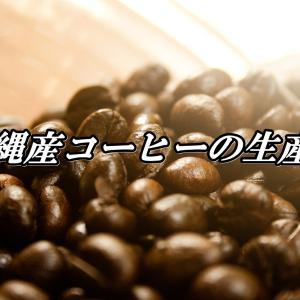沖縄産コーヒーの生産量