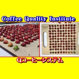 コーヒー品質協会の講習(CQI)