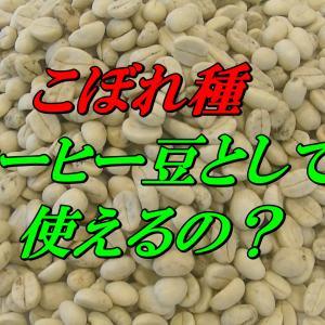 コーヒーのこぼれ種(パーチメント豆)とは?