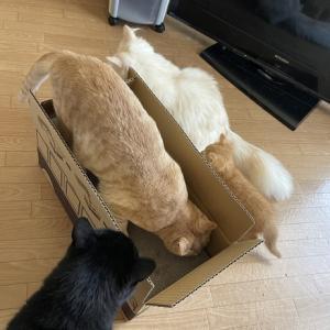 猫たちが喜ぶもの届いた〜