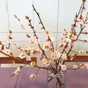 桃の花?梅の花? 春のダイニング風景。