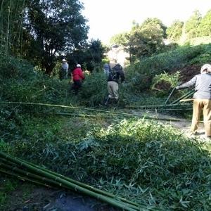 定例の竹林間伐作業を行いました。
