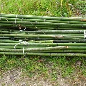 竹林の間伐作業を行いました。