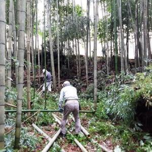 久し振りの竹林間伐作業