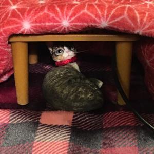 猫はコタツで丸くなる?(笑)