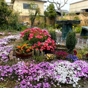 ガーデニング報告♪〜春の庭・2020〜