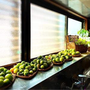 キッチン窓ぎわ〜トマト畑♪