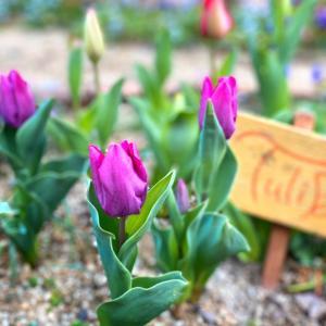 花便り〜2021.春〜