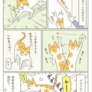 フラストレーション(猫まんが)