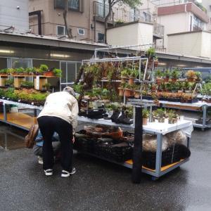 上野グリーンクラブ 秋の収穫祭