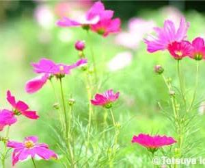 今日の一枚(植物 No.5)